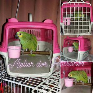 Caixa de Transporte Adaptada para Papagaio